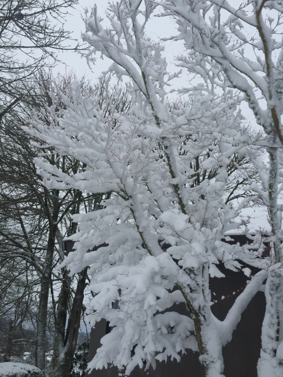 Snow day 2017...